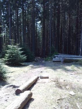 Im Wilden Wald1